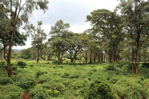 giraffe-centre-nairobi-kenya-2
