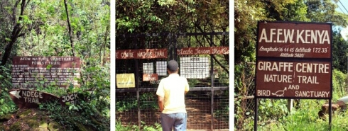 giraffe-centre-nairobi-kenya-9