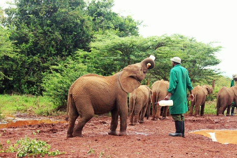 David Sheldrick Wildlife Trust DSWT Elephant Nairobi 10