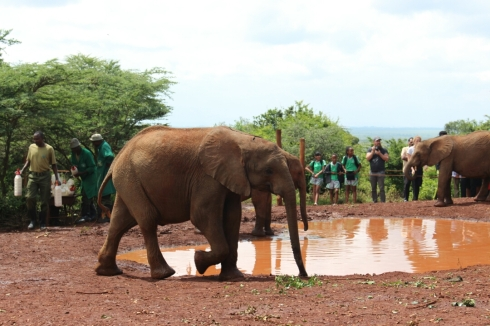 David Sheldrick Wildlife Trust DSWT Elephant Nairobi 15