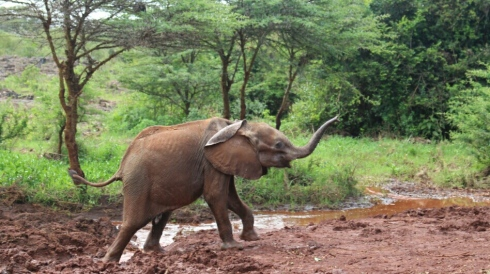 David Sheldrick Wildlife Trust DSWT Elephant Nairobi 2