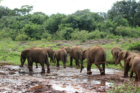 David Sheldrick Wildlife Trust DSWT Elephant Nairobi 3