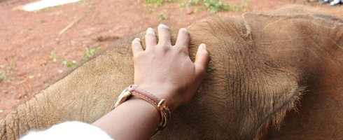 David Sheldrick Wildlife Trust DSWT Elephant Nairobi 6