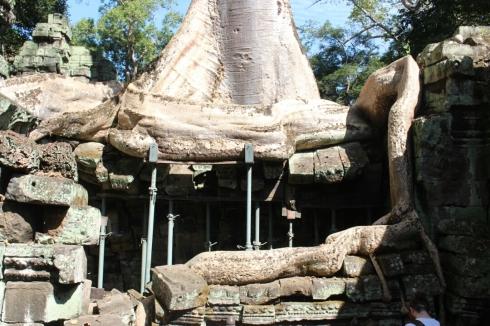 Ta Phrom Tomb Raider Temple Cambodia (3)
