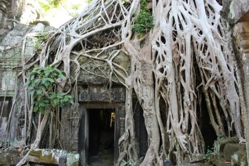 Ta Phrom Tomb Raider Temple Cambodia (4)