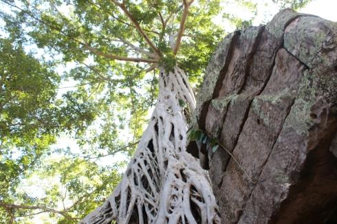 Ta Phrom Tomb Raider Temple Cambodia (5)