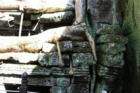 Ta Phrom Tomb Raider Temple Cambodia